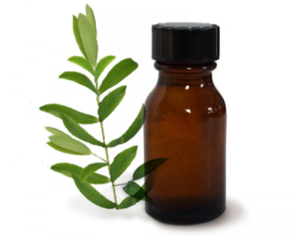 Olio di Malaleuca alternifolia - tea tree oil