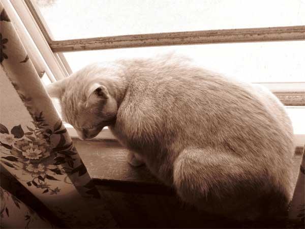 Un parto in casa... sotto la supervisione della gatta!